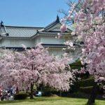 駿府城公園の桜2018!見頃はいつ?静岡まつりの開催日は?