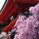 勝尾寺の桜2018!開花情報は?混雑するの?ライトアップはあるの?