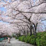 大阪府茨木『弁天さん』の桜2018!開花情報は?混雑状況も知りたい!