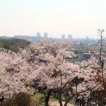摂津峡公園の桜2018!桜祭りはいつ?夜桜とライトアップ情報も!