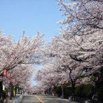 五月山公園の桜2018!開花はいつ?混雑状況は?アクセスと駐車場も!