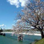 狭山湖の桜2018!開花状況は?ライトアップあるの?駐車場情報も!