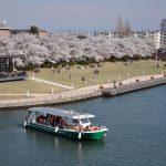 環水公園の桜2018!見頃は?ライトアップ時間は?富岩運河と水上ラインお花見コースも!