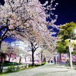 みなとみらいの桜2018!ライトアップ時間は?桜通りの場所はどこ?