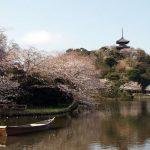 横浜三溪園の桜2018!見ごろは?ライトアップ時間は?混雑状況も!