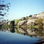 三ツ池公園の桜まつり2018!駐車場は?夜はやってないって本当?